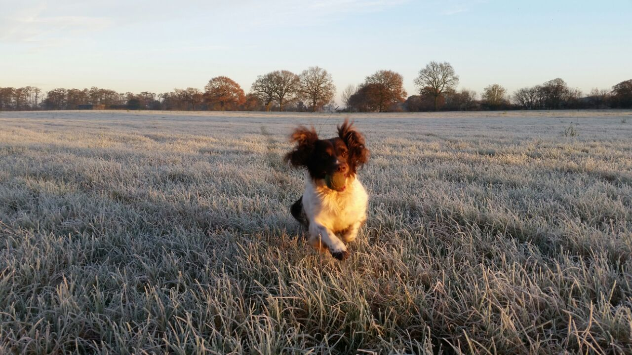Professional Dog Walking Service Services Strutts For Mutts